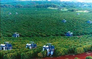 cherry harvest machine