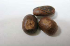 defective pulper nipped coffee beans